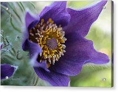 Purple Fleece Acrylic Print