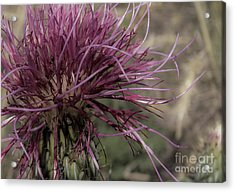 Purple Flower 2 Acrylic Print