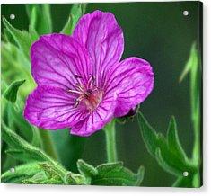 Purple Flower 2 Acrylic Print by Marty Koch