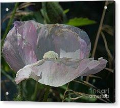 Purple Flower 4 Acrylic Print