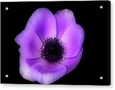 Purple Flower Head Acrylic Print
