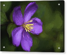 Acrylic Print featuring the photograph Purple Flower Macro Impression by Dan McManus