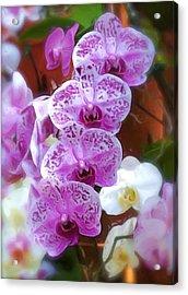 Purple Flower Acrylic Print by Ralph Liebstein