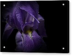 Acrylic Print featuring the photograph Purple Flower by Ryan Photography