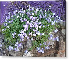 Purple Flower Textured Photo 1028b Acrylic Print