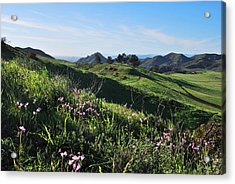 Acrylic Print featuring the photograph Purple Flowers And Green Hills Landscape by Matt Harang
