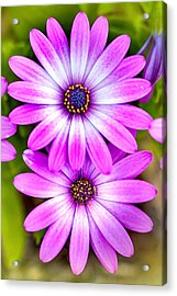 Purple Flowers Acrylic Print by Az Jackson