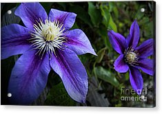 Purple Flowers Acrylic Print by Brian Jones