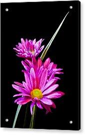 Purple Flowers Acrylic Print by Edward Myers