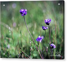 Acrylic Print featuring the photograph Purple Flowers by Jim and Emily Bush
