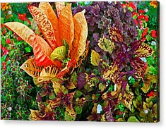 Purple Flowers Acrylic Print by Michael Thomas