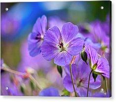 Purple Flowers Acrylic Print by Rae Tucker
