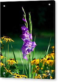 Acrylic Print featuring the photograph Purple Glads And Black-eyed Susans by Lila Fisher-Wenzel