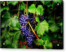 Grapes Acrylic Print by Greg Mimbs