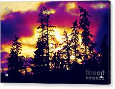 Acrylic Print featuring the photograph Purple Haze Forest by Nick Gustafson