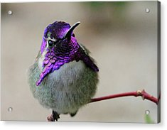Purple Head Acrylic Print