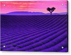 Purple Heart Acrylic Print