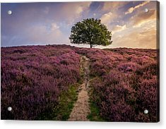 Purple Hill Acrylic Print