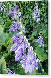 Acrylic Print featuring the photograph Purple Hosta Flowers by Beth Akerman
