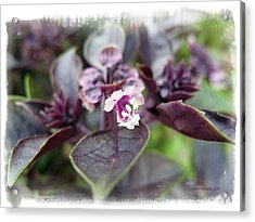 Acrylic Print featuring the photograph Purple In Autumn by Joan  Minchak