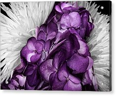 Purple In The White Acrylic Print