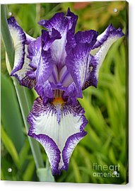 Purple Iris Art Acrylic Print