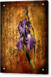 Purple Iris At Sunset Acrylic Print