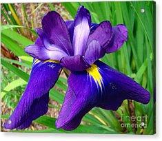 Purple Iris Beauty Acrylic Print by Sue Melvin