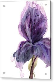 Purple Iris Acrylic Print by Dawn Derman