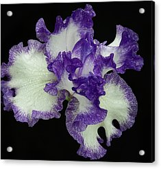 Acrylic Print featuring the photograph Purple Iris Frills by Jean Noren