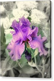 Purple Iris In Focal Black And White Acrylic Print by Margie Avellino