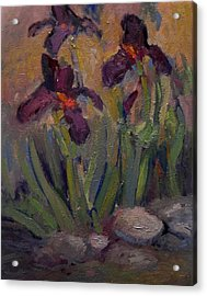 Purple Iris In Shade Acrylic Print