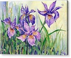 Purple Iris Acrylic Print