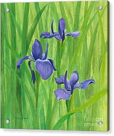 Purple Iris Acrylic Print by Phyllis Howard