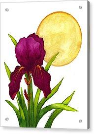Purple Iris Acrylic Print by Stephanie  Jolley