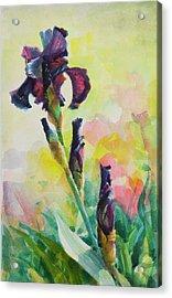 Acrylic Print featuring the painting Purple Iris by Steve Henderson
