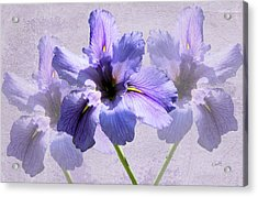 Purple Irises Acrylic Print