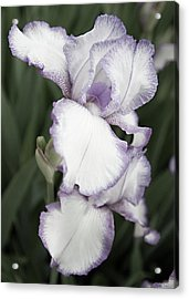 Purple Is Passion Acrylic Print by Sherry Hallemeier