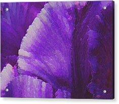 Purple  Acrylic Print by Jack Zulli