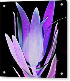 Acrylic Print featuring the photograph Purple by John Hansen