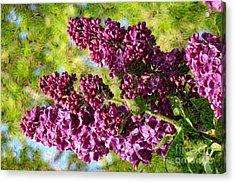 Purple Lilac 1 Acrylic Print by Jean Bernard Roussilhe