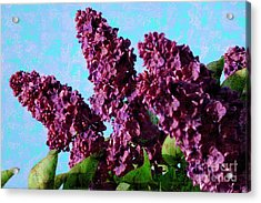 Purple Lilac 2 Acrylic Print by Jean Bernard Roussilhe