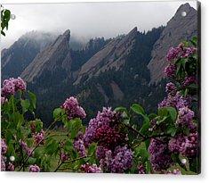 Purple Lilacs Flatirons Acrylic Print