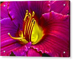 Acrylic Print featuring the photograph Purple Lily by Bill Barber