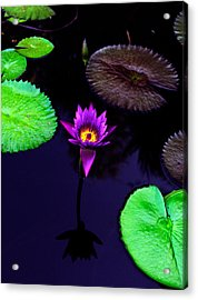 Purple Lily Acrylic Print by Gary Dean Mercer Clark