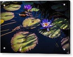 Purple Lily Acrylic Print