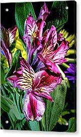 Purple Lily Acrylic Print by Mark Dunton