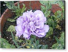 Purple Lisianthus Acrylic Print