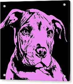 Purple Little Pittie Acrylic Print by Dean Russo