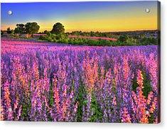 Purple Love Acrylic Print by Midori Chan